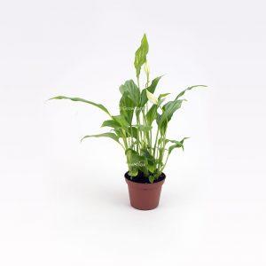 2. Wybierz rośliny